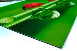 Plaque Magnétique Imprimée